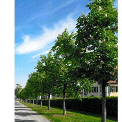 Vermögen und Bau Baden-Württemberg